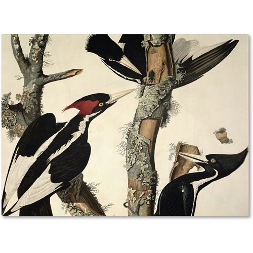 "Trademark Fine Art ""Ivory-Billed Woodpecker"" Canvas Art by John James Audubon"