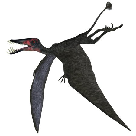 Dorygnathus A Genus Of Pterosaur That Lived In Europe And Germany During The Jurassic Period Poster Print