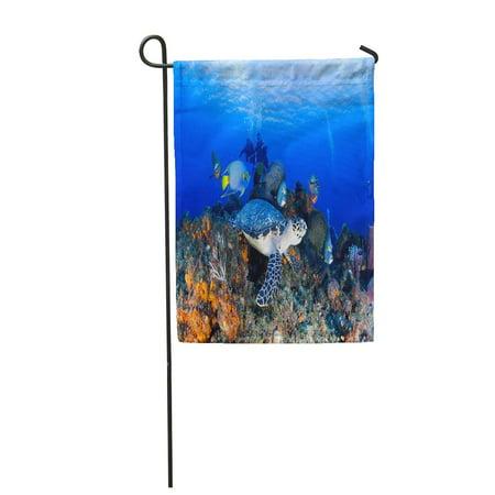 LADDKE Blue Dive Turtle Angelfishes Cozumel Gray Reef Scuba Angelfish Caribbean Garden Flag Decorative Flag House Banner 12x18 inch (Dive Cozumel)