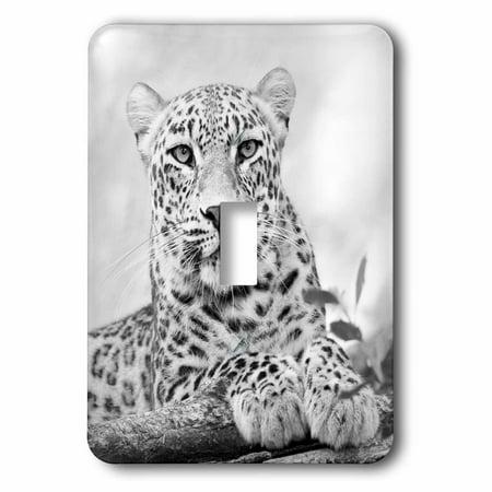 3dRose Black and White Jaguar Single Toggle Switch