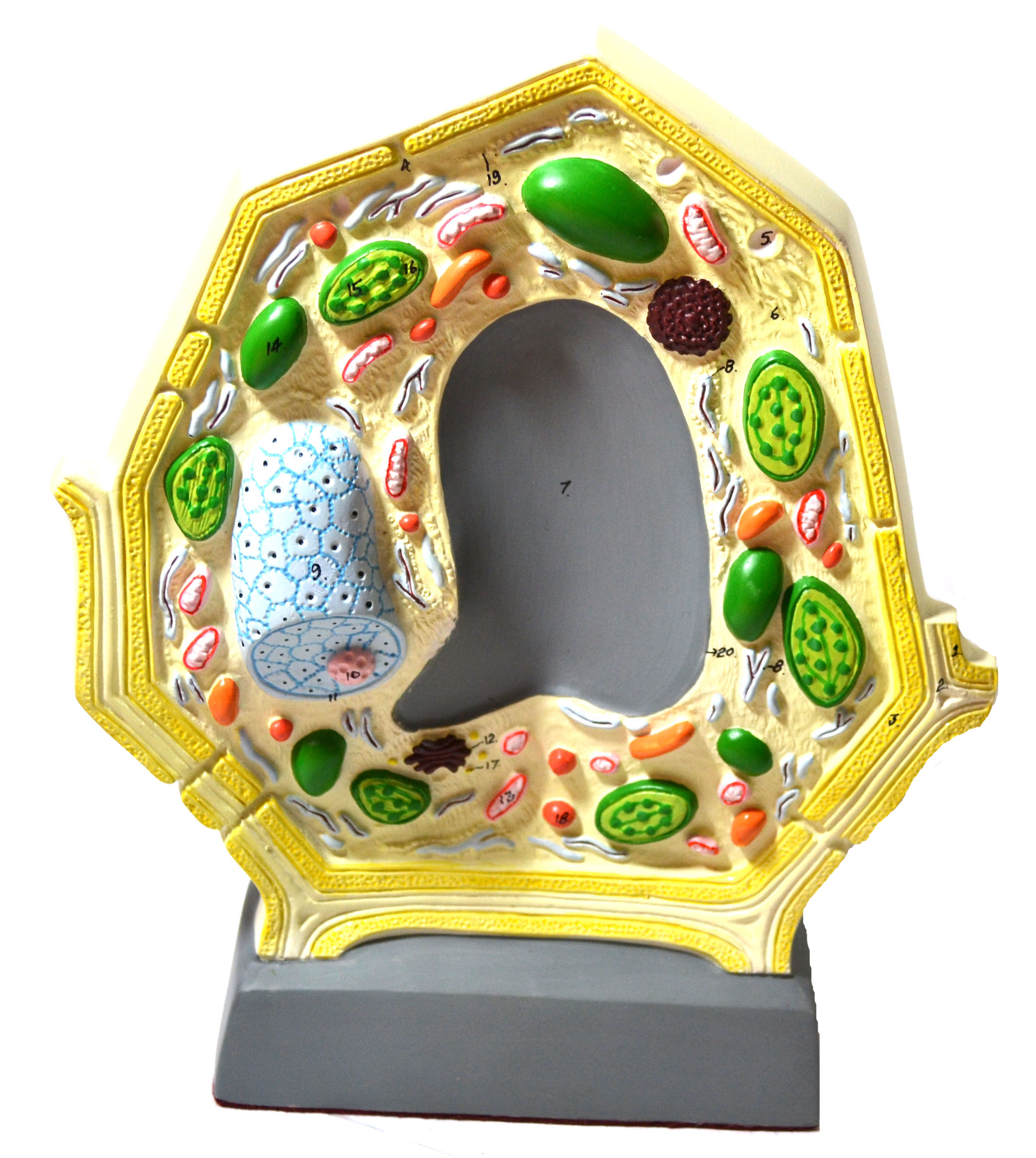 "Eisco Labs Plant Cell Model; Free Standing; Height 10.5""; Width 8.5""; Greatly Magnified"