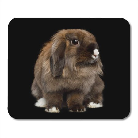 LADDKE Red Black Brown Rabbit White Nose on Portrait Beauty Mousepad Mouse Pad Mouse Mat 9x10 (Nose'n Around Rabbit Nose)