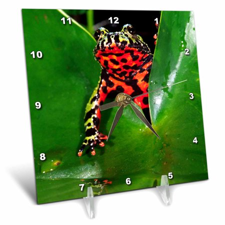 3dRose Fire Belly Toad, Native to China - NA02 DNO0112 - David Northcott, Desk Clock, 6 by 6-inch