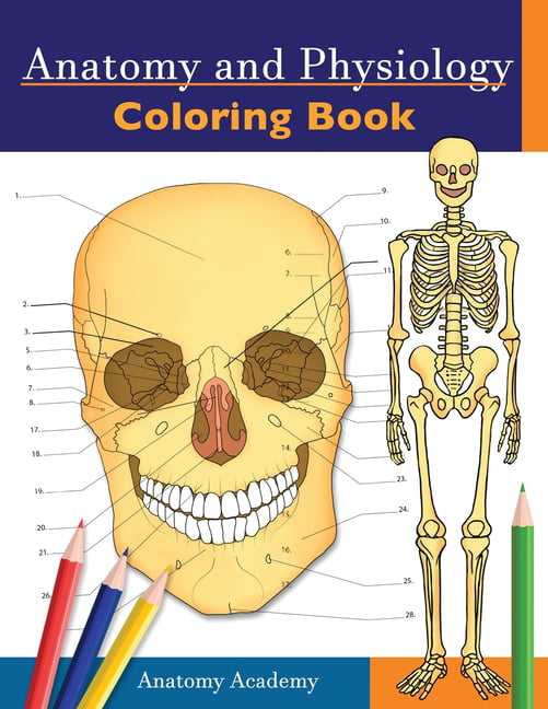 Anatomy And Physiology Coloring Book : Incredibly Detailed Self-Test Color  Workbook For Studying - Perfect Gift For Medical School Students, Doctors,  Nurses And Adults (Paperback) - Walmart.com - Walmart.com
