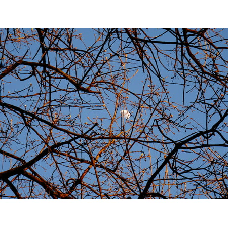 LAMINATED POSTER Gems Sky Tree Day Luna Branches Poster Print 24 x 36