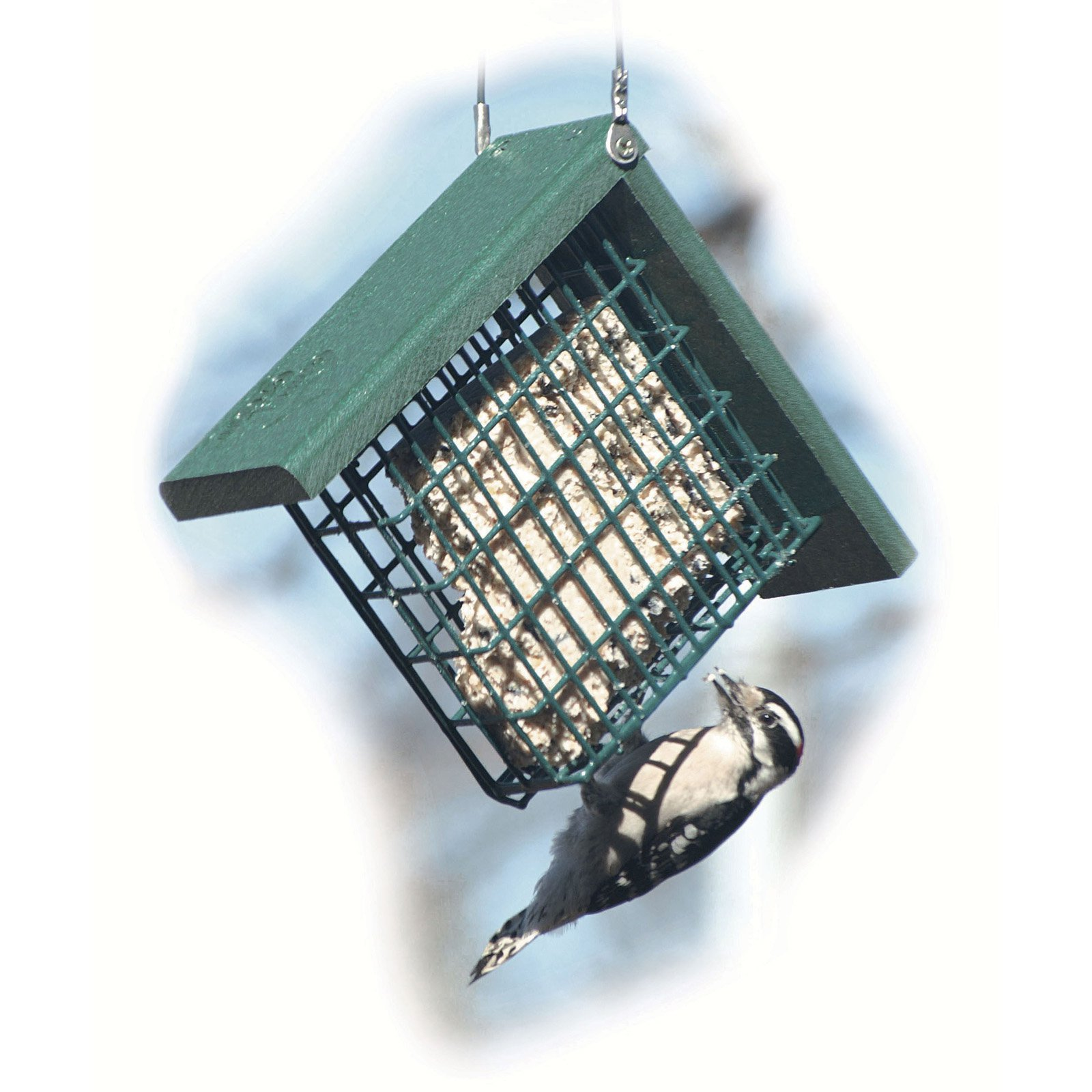 Audubon NAGGSUET Going Green Suet Feeder