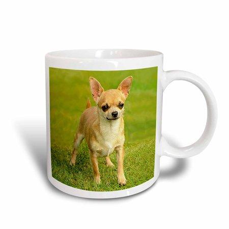 Coated Chihuahua (3dRose Chihuahua, Ceramic Mug, 11-ounce )