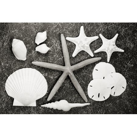 Shells And Starfish Scatterd On Textured Surface (Sepia Photograph) Canvas Art - Bill Brennan  Design Pics (17 x 11) ()
