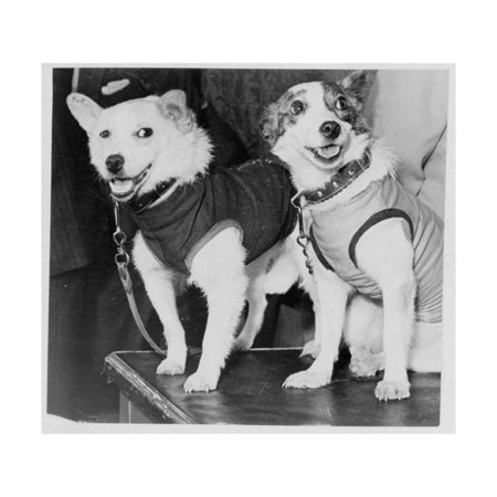 Belka and Strelka, Russian Cosmonaut Dogs, 1960 Print Wall Art