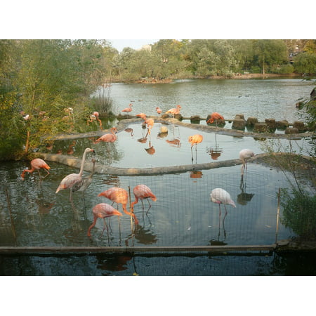 Framed Art for Your Wall Nature Pink Flamingo Animals Flamingo Pond Zoo 10x13 Frame - Flamingos For Sale