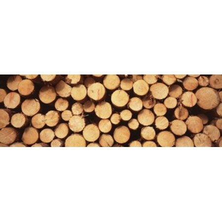Marked Wood In A Timber Industry Black Forest Germany Canvas Art   Panoramic Images  36 X 12