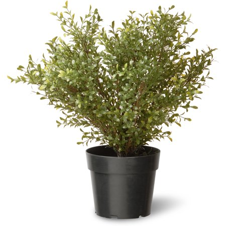"National Tree 24"" Argentina Plant with Green Pot"