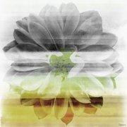 Parvez Taj Bloom