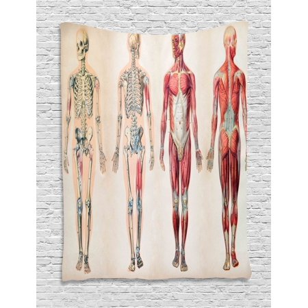 (Human Anatomy Tapestry, Vintage Chart of Body Front Back Skeleton and Muscle System Bone Mass Graphic, Wall Hanging for Bedroom Living Room Dorm Decor, 60W X 80L Inches, Ruby Cream, by Ambesonne)