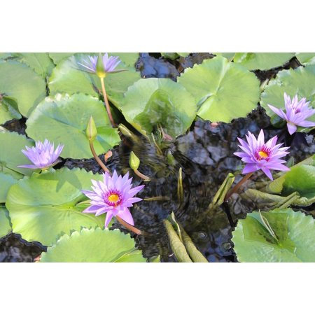 canvas print lilly pad water green flower plants lilly pad stretched canvas 10 x 14