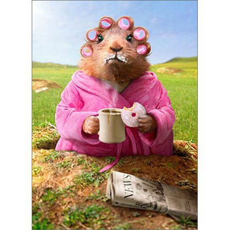 Avanti Press Morning Ground Hog Funny / Humorous Just for Fun Card](Morning Glory Stationery)