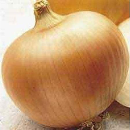 Onion Yellow Sweet Spanish Great Heirloom Vegetable 700 (Sweet Onion)