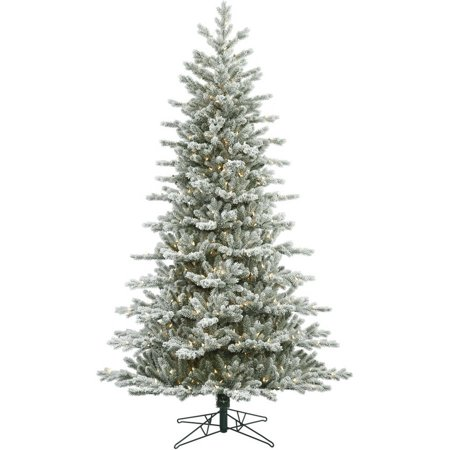 Vickerman 5.5 Frosted Eastern Frasier Fir Artificial Christmas Tree with 250 Clear Lights