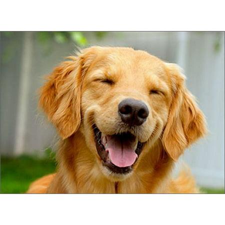 Avanti Press Smiling Golden Retriever Funny / Humorous Dog Birthday Card