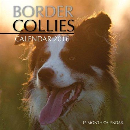Border Collies Calendar 2016: 16 Month Calendar
