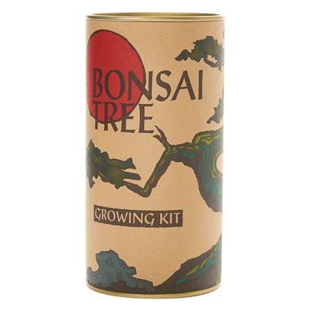 Bonsai Tree (Japanese Maple) | Seed Grow Kit | The Jonsteen Company