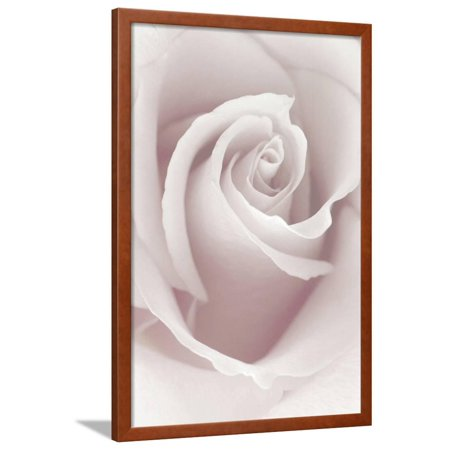 Anna Rose - Rose Abstract Framed Print Wall Art By Anna Miller