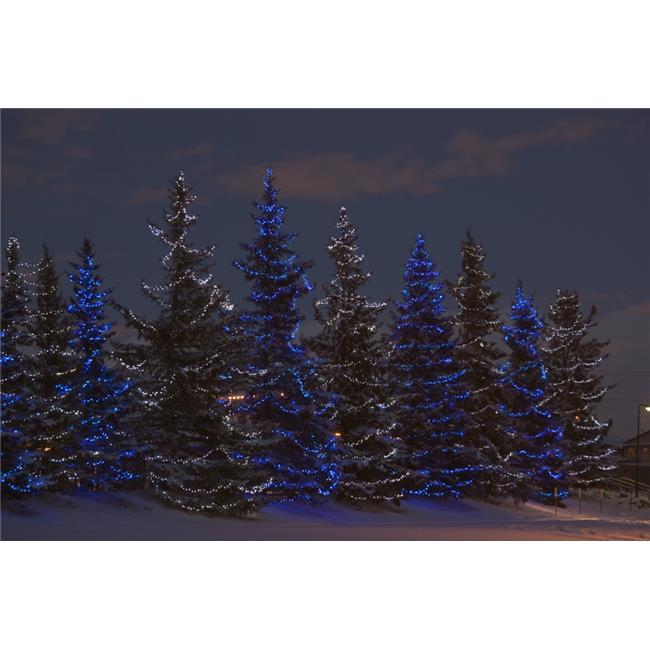 Christmas In Calgary Canada.Calgary Alberta Canada A Row Of Evergreen Trees With