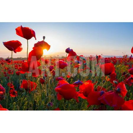 Early Morning Red Poppy Field Scene Print Wall Art By Yuriy - Poppy Field Gift