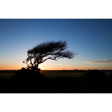 Wind sculptured Hawthorn Tree The Copper Coast County Waterford Ireland Poster Print Copper Wind Sculpture