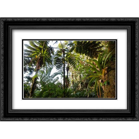 Bromeliad and tree fern at 1500 meters altitude in tropical rainforest, Sierra Nevada de Santa Marta 2x Matted 24x18 Black Ornate Framed Art Print by Ruoso, Cyril