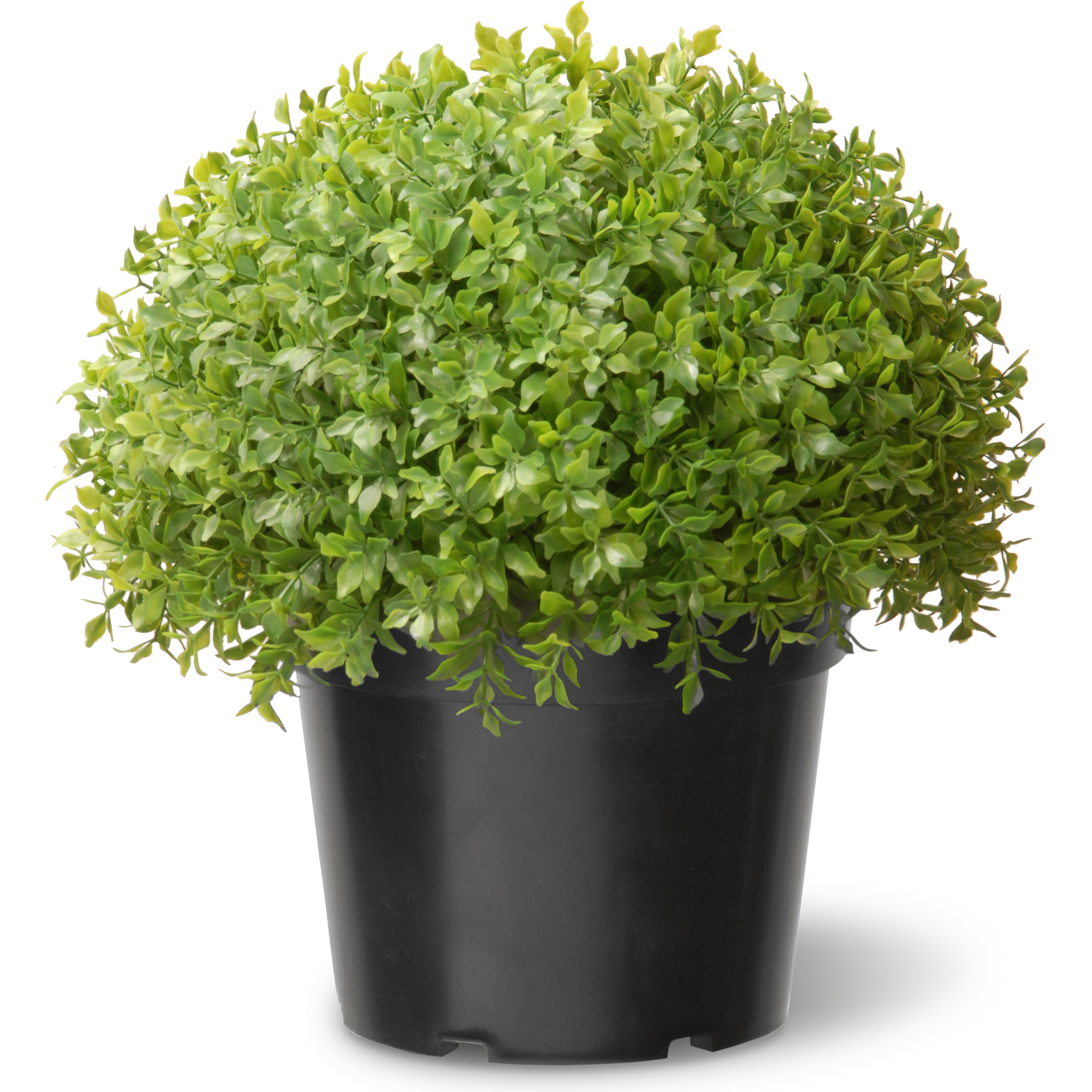 """National Tree 13"""" Globe Japanese Holly with Green Pot"""