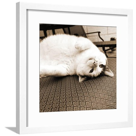 Kitty II Crop Framed Print Wall Art By Jim Dratfield