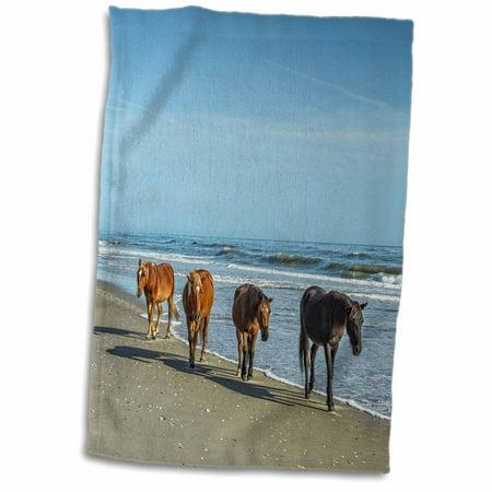 3drose A Group Of Wild Spanish Mustangs Of Corolla Walking Along The Beach Towel 15 By 22 Inch Walmart Com Walmart Com