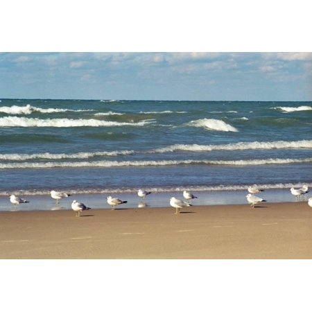 Flock of seaguls on the beaches of Lake Michigan, Indiana Dunes, Indiana, USA Print Wall Art By Anna Miller](Halloween Usa Michigan)