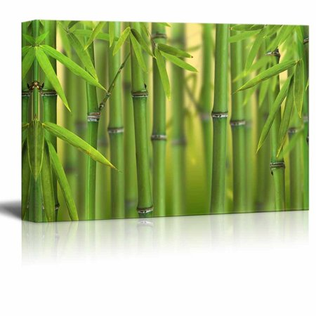 wall26 Canvas Prints Wall Art - Bamboo Sprouts Forest | Modern Wall Decor/Home Decoration Stretched Gallery Canvas Wrap Giclee Print. Ready to Hang - 12
