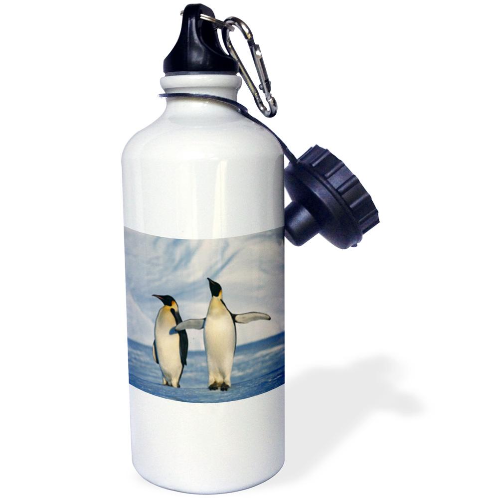 3dRose Antarctica, Emperor Penguins standing in winter , Sports Water Bottle, 21oz by Supplier Generic
