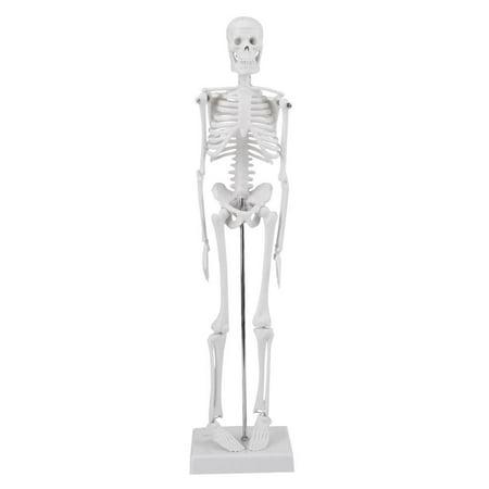 1PCS 45cm Human Skeleton Anatomical Model Medical Anatomical Teaching Tool With Base,White
