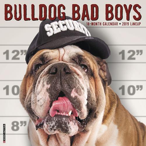 Willow Creek Press 2019 Bulldog Bad Boys Wall Calendar