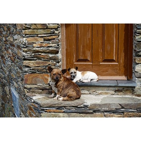LAMINATED POSTER Canine Domestic Guarding Dogs Waiting Sitting Poster Print 24 x 36](Sitting Around Waiting For Halloween)