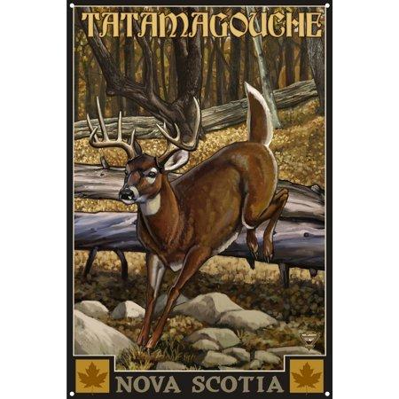 "Tatamagouche Nova Scotia Whitetail Deer No Hunter Metal Art Print by Paul A. Lanquist (12"" x 18"")"