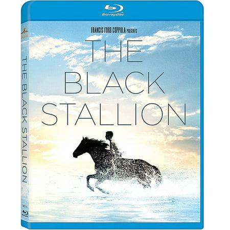 The Black Stallion  Blu Ray   Widescreen