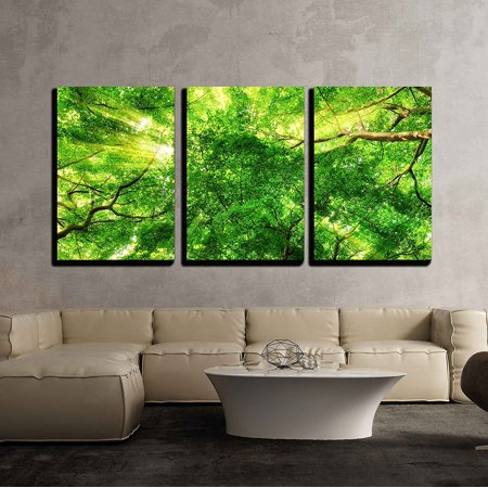 wall26 - 3 Piece Canvas Wall Art - Sunrays Shining Through Green Leaves of High Treetops in a Beech Forest - Modern Home Decor Stretched and Framed Ready to Hang - 24