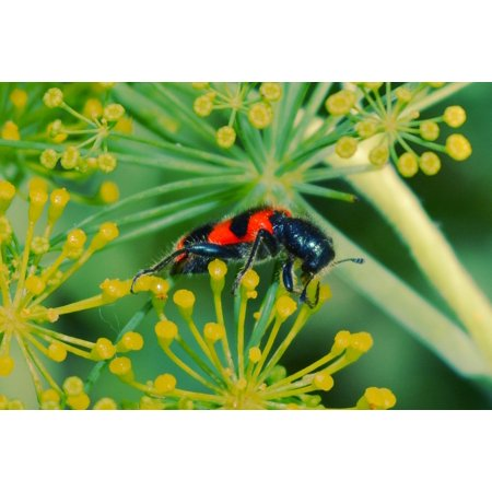 Laminated Poster Flowers Green Yellow Black Insect Red Ladybug Poster Print 24 x 36](Yellow Lady Bug)