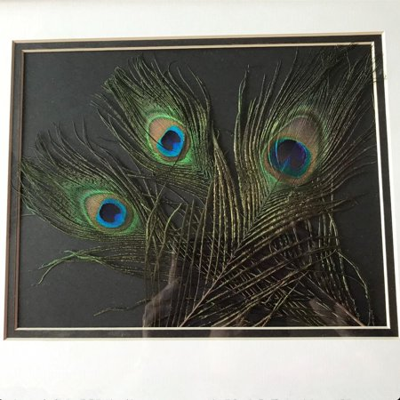 Peacock Eye Feather, Real Natural Peacock Feathers 10