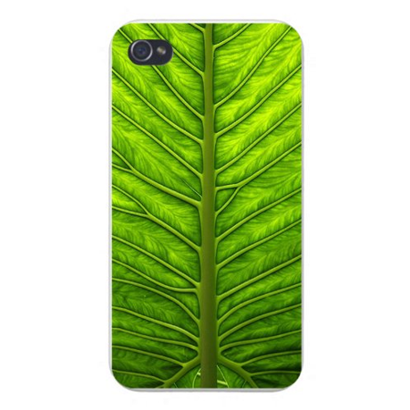 Apple Iphone Custom Case 5 / 5s White Plastic Snap on - Closeup Green Leaf w/ (Leaf Primrose Five Light)