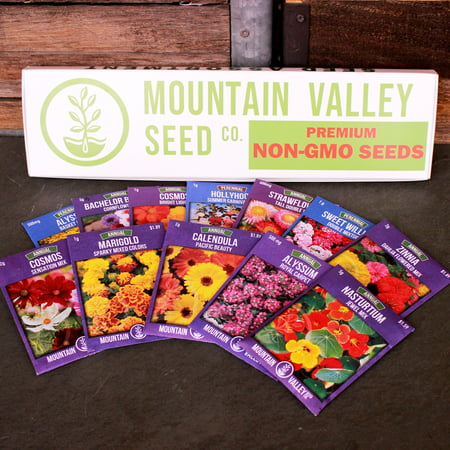 Hollyhock Hyacinth Bulb (Annual Flower Garden Seed Collection - Deluxe Assortment - 12 Flower Gardening Seed Packets: Nasturtium, Hollyhock, Sweet William, Strawflower, More)