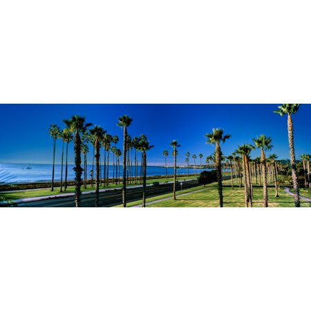 Palm trees near the beach Santa Barbara California USA Poster (Best Beaches Near Santa Barbara)