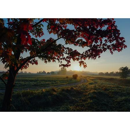 Sunset Maple (LAMINATED POSTER Maple Sunset Season Foliage Fall Scene Autumn Poster Print 24 x 36)