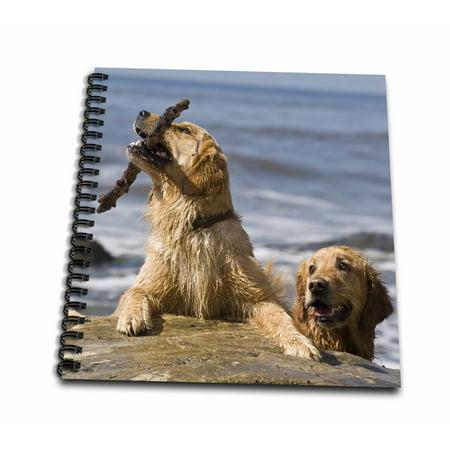 3dRose Two Golden Retriever dogs at a beach - US05 ZMU0282 - Zandria Muench Beraldo - Mini Notepad, 4 by 4-inch 4' Golden Retriever Face