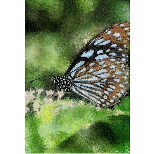 """Trademark Fine Art """"Butterfly in Blue"""" Canvas Wall Art by Lois Bryan"""